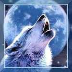 Wolf Song HD live wallpaper
